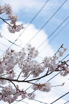 Spring is coming! Is It Spring Yet, Spring Is Coming, Spring Is Here, My Spring, Spring Time, Summer, Best Seasons, Four Seasons, Cherry Blooms