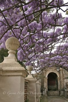 Much prefer the the minimal look seen in Eupopean & Japanese arbors to the look of the heavy wooden ones. Wisteria arbor at Tivoli Gardens, Italy Wisteria Arbor, Wisteria Plant, Wisteria Garden, Purple Wisteria, French Courtyard, Tivoli Gardens, Famous Gardens, Garden Arbor, Vides