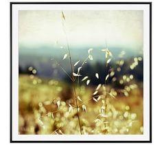"""Sunlit Grasses Framed Print by Lupen Grainne, 48 x 48"""", Wood Gallery Frame, Black, Mat"""
