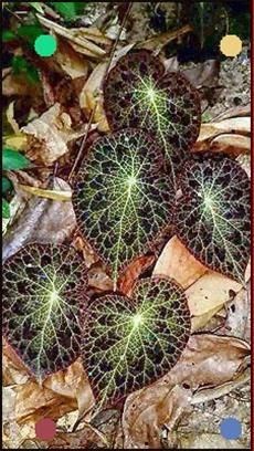 Pin On Pretty Unusual Plants