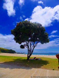 Pohutukawa Tree, Mount Maunganui beach, New Zealand The Beautiful Country, Beautiful Places In The World, Most Beautiful, Mount Maunganui, Homeland, Trips, Landscapes, Childhood, Country Roads