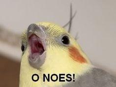 Funny cockatiel