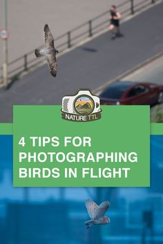 In this wildlife photography tutorial learn how to take photos of birds in flight. These 4 essential tips for bird photography will help you capture sharp action shots. Great advice for nature photographers and wildlife photography lovers. Wildlife Photography Tips, Action Photography, Hobby Photography, Photography Basics, Photography Tips For Beginners, Photography Lessons, Photoshop Photography, Underwater Photography, Photography Tutorials