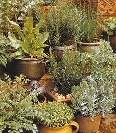 Learn how dill, fennel, basil, peppermint and other herbs can help you.