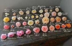 květinové lahůdkářství - Hledat Googlem
