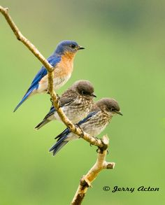 Listening to the songs of the birds makes me feel calmer in minutes