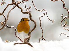 """Let it snow!"" by Jacky Parker Floral Art | RedBubble"