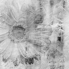 Square Series - Black White 5 - Andrea Anderegg  #painting #flower #texture #blackwhite #artcollector #artgallery #wallart #homedecor #decor #art