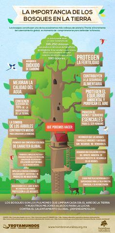 Con el objetivo de recordar la importancia de los árboles para la vida en la Tierra hicimos esta infografía para la fundación Hombre Naturaleza  Infografía, Inphography, Infographic, My Job