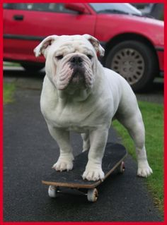 Gabe and his skateboard
