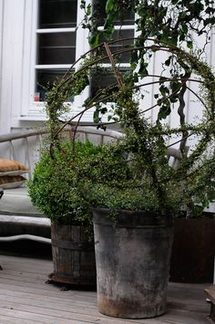 Training spherical topiary to grow. Garden Urns, Garden Planters, Container Plants, Container Gardening, Pot Jardin, Garden Features, Garden Cottage, Garden Styles, Dream Garden