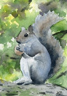 SQUIRRELL Watercolor Signed Fine Art Print by Artist DJ Rogers. $9.50, via Etsy.