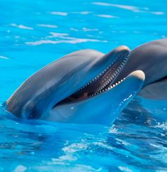 dolphins during daytime