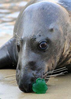 bk1 Lucky Charms Treats, Brookfield Zoo, Albert Schweitzer, Going Fishing, Hippopotamus, Photos Of The Week, Panther, Face, Seals