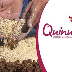 International Days, Food Security, Important People, Quinoa, Plays, Nutrition, World, Natural, Games