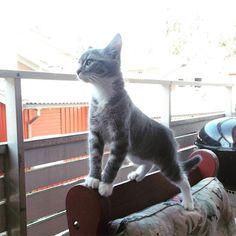Ståtlig katt #cat #kitten by bellabellaelabellalla