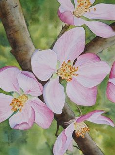Fine art - Danielle Beaulieu's watercolor florals paintings, includes paintings of roses, peonies, tulips and many more flowers.