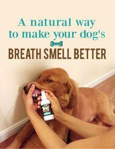 A Natural Way to Make Your Dog's Breath Smell Better http://trudog.com/lp/spray-me-3-p/?utm_source=%20Jeremy%20New%20Pinterest%20Spray%20Me&utm_medium=social&utm_campaign=Pinterest%20New%20Second%20Image