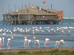 The lagoon at Walvis Bay, Namibia Africa Destinations, Travel Destinations, Namib Desert, City Gallery, Namibia, West Africa, South Africa, Holiday Places, Just Dream