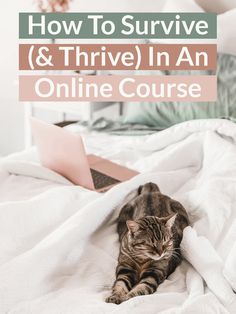 Are you struggling to adjust to online courses? Click through for ten excellent tips to help you conquer online classes with ease.