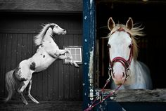 Ditte Isager takes some beautiful pictures of horses....