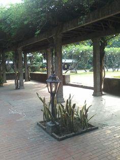 #Intramuros Intramuros, Plants, Flora, Plant