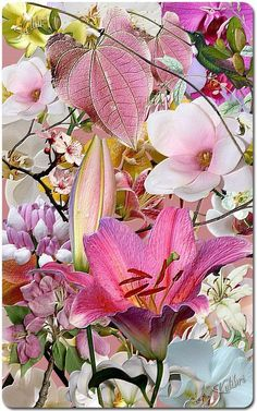 Flowers And Garden Ideas : pink lily chinese lantern My Flower, Pretty In Pink, Pink Flowers, Beautiful Flowers, Simply Beautiful, Pink Leaves, Absolutely Gorgeous, Bouquet Champetre, Pink Lily