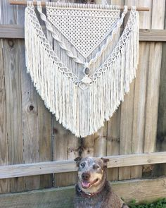 Happy Friyay ✨ I have been busy finishing orders for my 'Jenny' Hanging. I will be doing some final touches over the weekend and will have a few more sent off Monday Thank you all so much for the love And a big thank you to my little male model . . . #macrame #macramewallhanging #wallhanging #madewithlove #sunshinecoast #handmade #timber #cottonrope #bohodecor #coastal #stone #fringe #statementpiece #wallart #homedecor #interiordesign #cattledog #furbaby