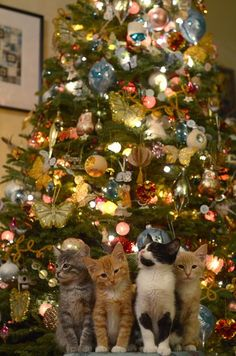 Such a cute Christmas picture. But 2 questions - how did the photographer get these kitties to sit still long enough to take this picture? And how is that Christmas tree still standing with all the decorations intact? Kittens Cutest, Cats And Kittens, Cute Cats, Funny Cats, Christmas Animals, Christmas Cats, Merry Christmas, Family Christmas, Christmas Time