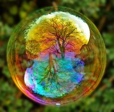 ALCHEMIST Appears to be reflections of the nearby trees in a bubble! Awesome isn't it? I love the inspirational images and quotes on this site - Joie De Vivre. Photo Trop Belle, Bubble Tree, Bubble Shot, What's My Favorite Color, Favorite Things, Cool Photos, Beautiful Pictures, Beautiful Scenery, Pretty Images
