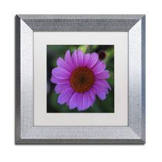 "Trademark Art ""Purple Coneflower"" by Kurt Shaffer Framed Photographic Print Size: 1"