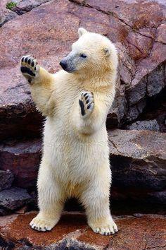 Die 465 Besten Bilder Von Standing Bear Baren Cut Animals Funny