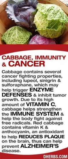 Cabbage contains several cancer fighting properties, including lupeol, sinigrin sulforaphane, which may help trigger enzyme defenses inhibit tumor growth. Due to its high amount of Vitamin C, cabbage helps strengthen the Immune System help the body fight against free radicals. Red cabbage contains vitamin K anthocyanin, an antioxidant to help reduces plaque on the brain, thus can help prevent Alzheimer's disease. #dherbs #healthtips by stella