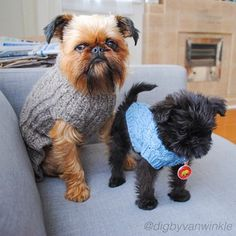 Everyone loves a good knit. | 29 Style Lessons From Instagram's Most Fashionable Puppies