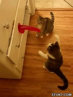 The perfect PussInBoots Dildo PlayDildo Animated GIF for your conversation. Discover and Share the best GIFs on Tenor. Adults Only Humor, Funny Jokes For Adults, Funny Cat Videos, Funny Cats, Image Fun, Wtf Fun Facts, Twisted Humor, Cat Gif, Funny Moments
