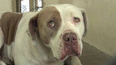 ***CRITICAL- 6/13/16 BABY GIRL IS A SWEET PITTY GIRL WHO LONGS FOR A LOVING HOME!   RESCUE ONLY  #A4925105 My name is BABY GIRL and I'm an approximately 3 year old female Pit Bull. I am not yet spayed. I have been at the Carson Animal Care Center since 3/3. I will be available on 3/14. You can visit me at my temporary home at C122.  NOT LISTED ONLINE  Carson Shelter, Gardena, California  216 Victoria Street, Gardena, California  310.523.9566, M-TH 12pm - 7pm, F-SU - 10am - 5pm