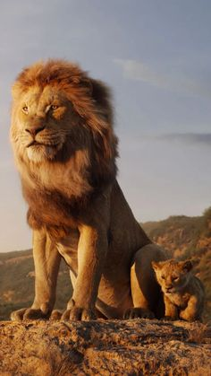 The New Lion King Just Isn't Animated Enough   Vanity Fair Lion King Movie, Lion King Art, Lion Art, Disney Lion King, The Lion King, Lion King Pictures, Lion Images, Images Of Lions, Beautiful Cats