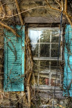 Overgrown window...awesome shutters