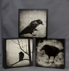Three Sepia Crow Photographs on Wood Panel5x5 by Ketzelphotography