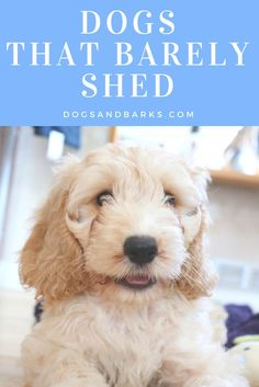 There's no such thing as a no-shed dog (yet!) but there are plenty of dogs who shed so little that you'd think they're hoarding their fur!