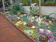 jardín con Suculentas en el patio.