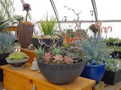 succulent container display at a garden centre