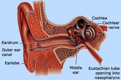 COLLOIDAL SILVER HEALS EAR INFECTIONS FAST -- Simply put, colloidal silver is the single-most effective natural substance in existence for healing ear infections.  Learn more about the infection-fighting qualities of colloidal silver at www.TheSilverEdge.com