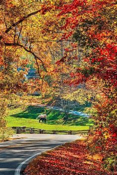 Autumn Leaves and grazing horses. on a mountain back road near Chimney Rock, NC Beautiful World, Beautiful Places, Beautiful Pictures, Autumn Scenery, Back Road, All Nature, Fall Pictures, Belle Photo, Autumn Leaves