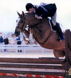 """1998 - National Championship """"Code of Honor"""" Owner/Rider, Jennie Carleton, Small Junior Championship.  The first horse ever to win the Nation in 2 divisions  in the same year. Tim Herrick, rider in photo."""