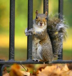 Inside the World of Squirrels! These cute and adorable cute squirrels will warm your heart! - Some Pets
