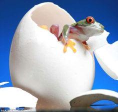 Bob Garas Captures Brilliant Images of his Adorable Pet Frogs #pets