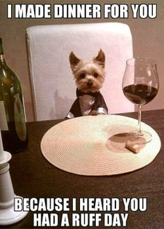 Don't Ask How I Poured the Wine...And Don't Go in the Kitchen        #lolanimals #funnyanimals
