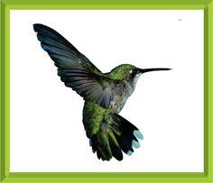 Free Hummingbird Paintings And Prints