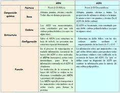 Diferencias Entre Adn Y Arn Cuadro Comparativo Adn Y Arn Adn Enseñanza De Química
